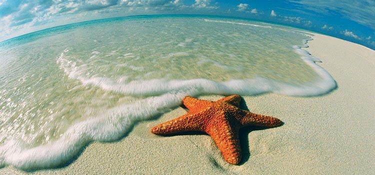Deniz Yıldızının Hikayesi